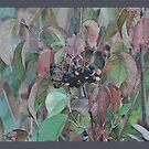 Wild Berries  by Shubd