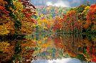 Majestic  Beavers Bend by Carolyn  Fletcher