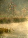 Morning Mist At Beavers Bend by Carolyn  Fletcher