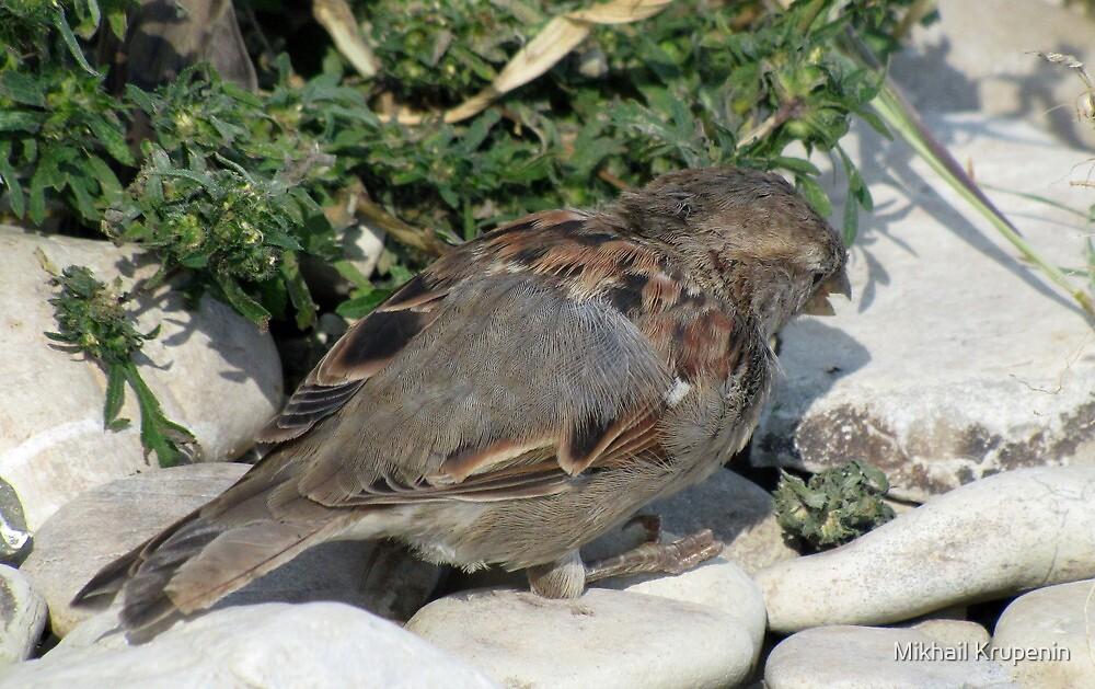 Little Sparrow by Mikhail Krupenin