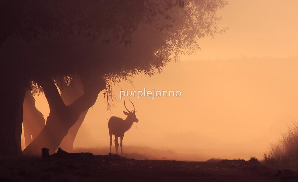 Lonely Deer At Dawn by purplejonno