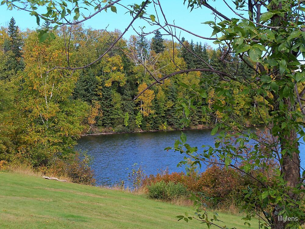 Autumn Trees Around Lake by lilylens