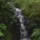 Tumbling Stream by Thomas Adams