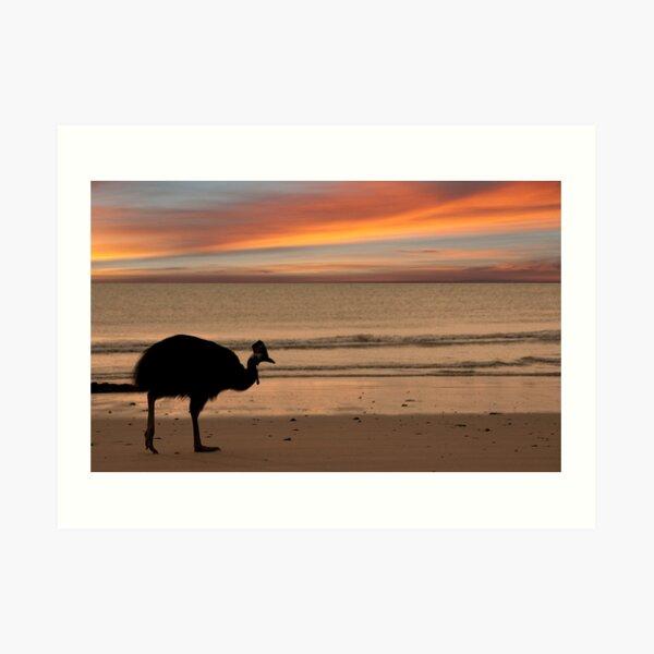Cassowary Sunset Art Print