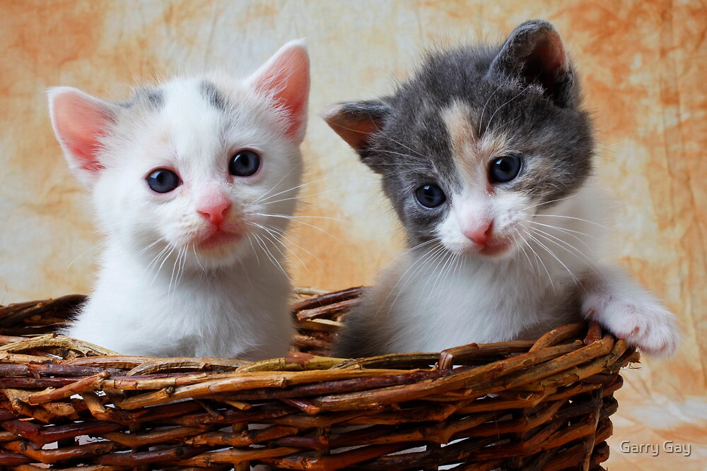 Two kittens in basket by Garry Gay