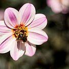 Bee-ing Visited by Belinda Osgood
