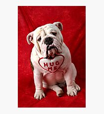English Bulldog puppy hug me Photographic Print