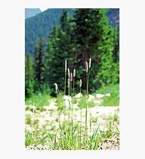 Berthoud Pass Tall Grass  Photographic Print