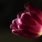 ~tulip~ by Cordelia