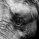 Up Close & Serious by Nick Bradshaw