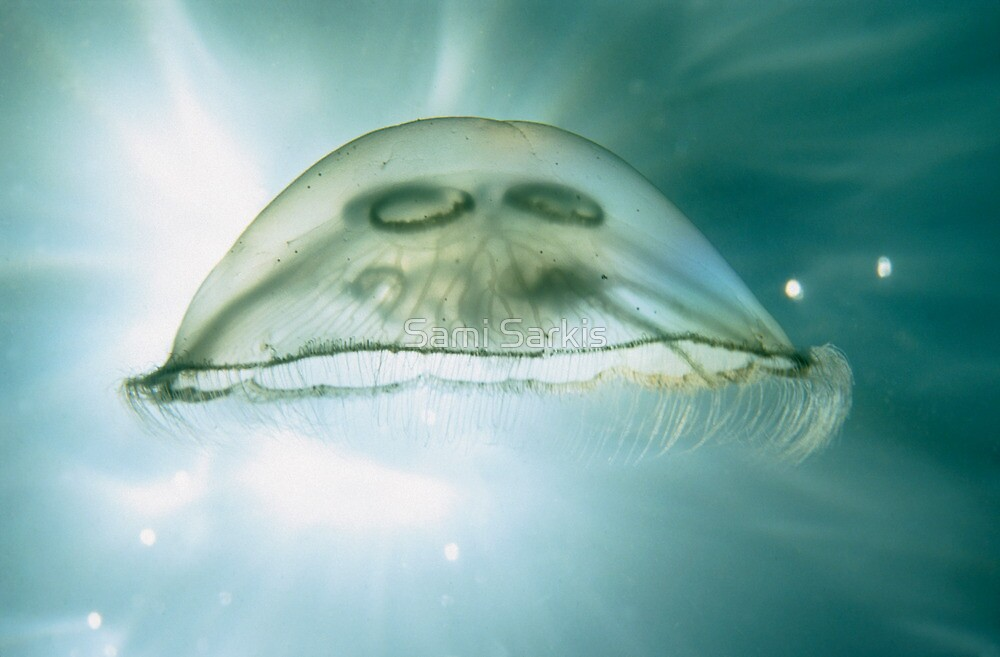 Jellyfish Underwater by Sami Sarkis