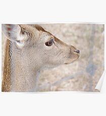 Alert - I See You Deer  Poster