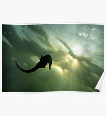 Seahorse (Hippocampus sp.), silhouette, underwater view Poster