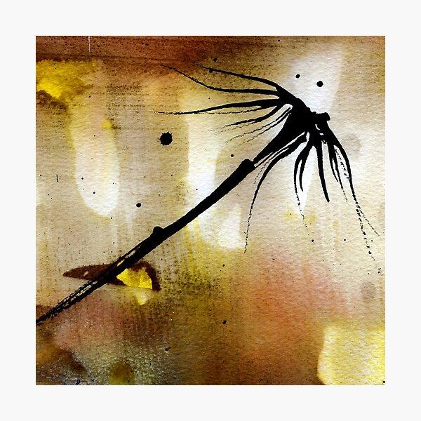 through the light Photographic Print