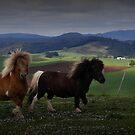 Two Ponies by Josie Jackson