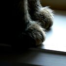 barefoot by Melissa Hillard