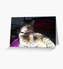 Sunlight dancing on Boris! Greeting Card