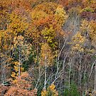 New England Fall by Kerry Dunstone