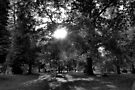 Sun Shining Through Trees  by Artberry