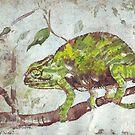 Chameleon (Chamaeleonidae) by Maree Clarkson