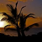 Palmtree Sunset by Mark Iocchelli