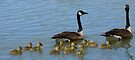 Family of Geese by Betsy  Seeton