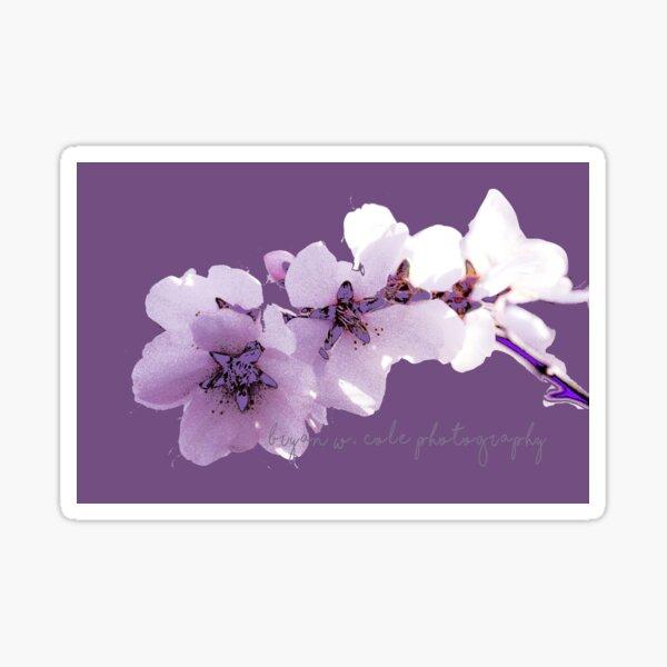 Almond Blossoms on Plum 2020  Sticker