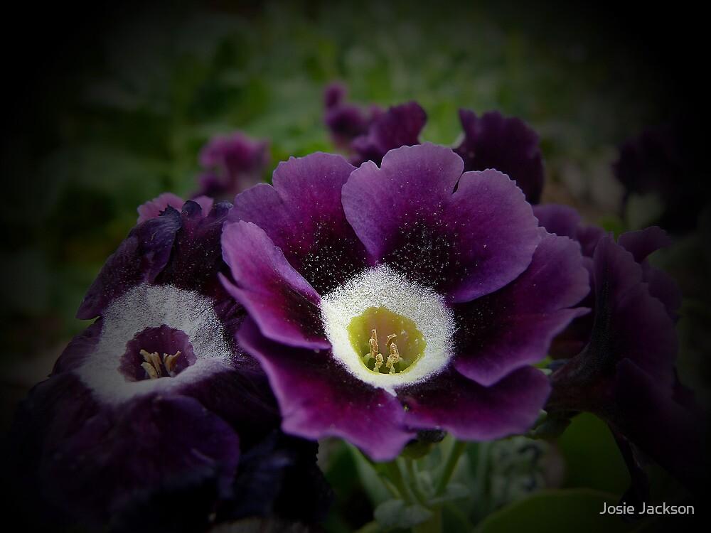 Purple by Josie Jackson
