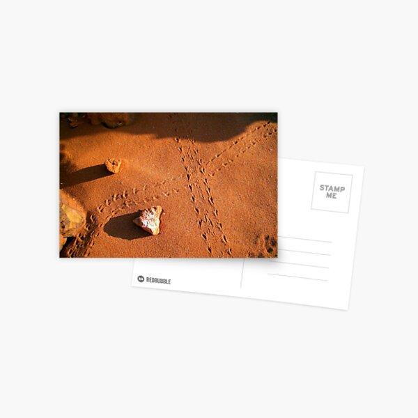 Lizard Tracks - Broome, WA. Postcard