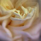 Comfort by Lozzar Flowers & Art