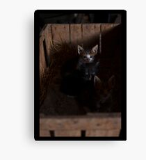 A small cats Canvas Print