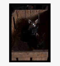 A small cats Photographic Print