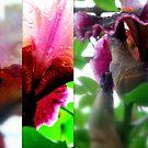 Like Vintage Wine Collage by Lozzar Flowers & Art