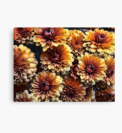 Potted Rusty Chrysthanthemum Canvas Print
