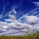 CANOLA PEEKING THROUGH THE CLOUDS by Helen Akerstrom Photography