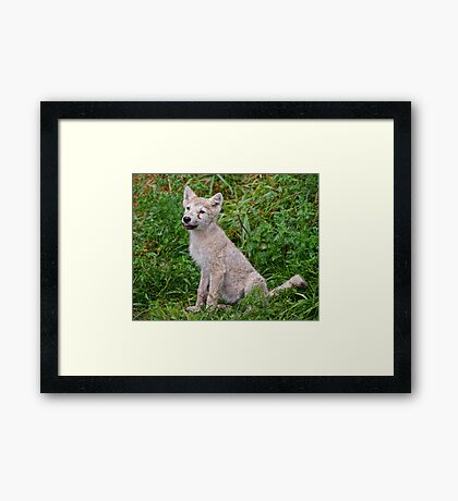 Ready for Obedience Training Framed Print