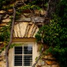Window vines by bcollie