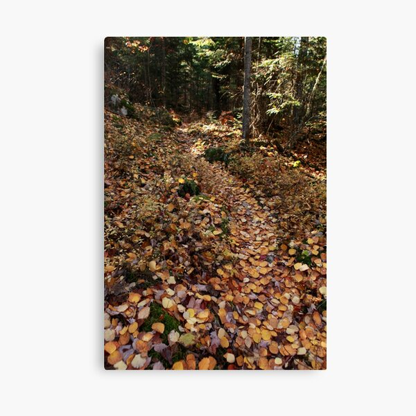 Yellow-leaf road Canvas Print
