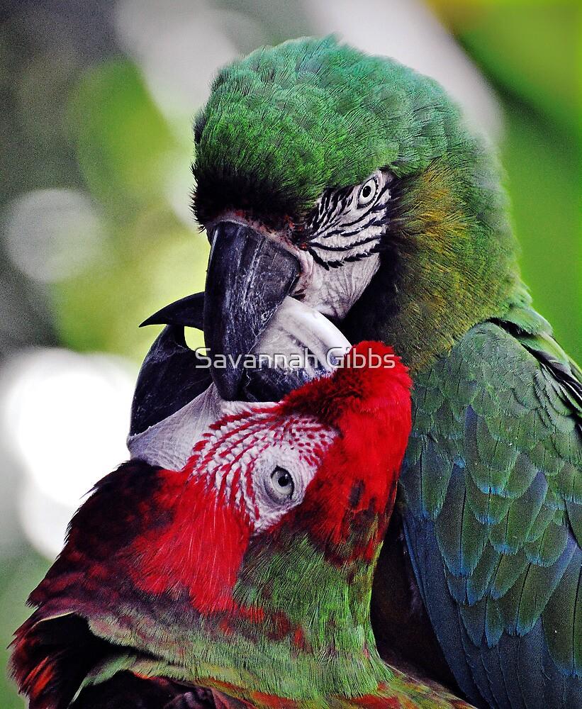 Kissing Parrots  by Savannah Gibbs