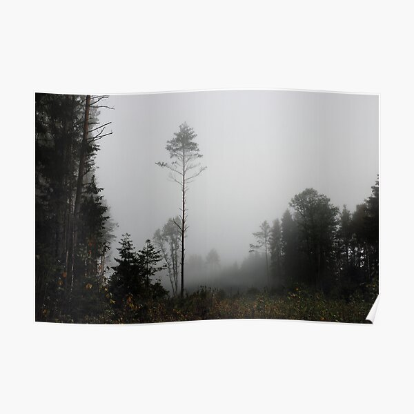 Foggy morning in autumn forest Poster