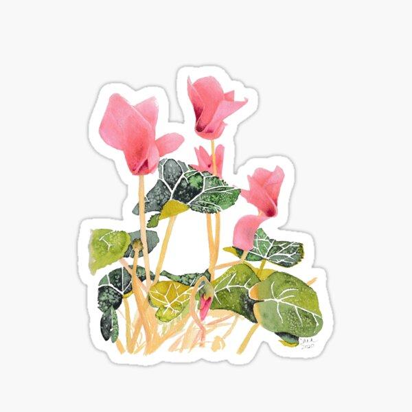 Cyclamen  Sticker