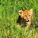 Happy Lion Cub by evilcat