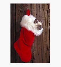 Kitten in stocking Photographic Print