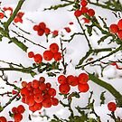 Snow and Berrys - iPhone Case by Leon Ritchie