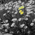 Natures little pretties... by Lorin Richter