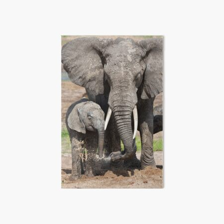 Elephant Mother and Calf Art Board Print