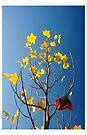 Autumn by Leanne Robson