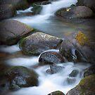 Alec Creek I by Tula Top