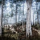 The Misty Forest by Marc Garrido Clotet