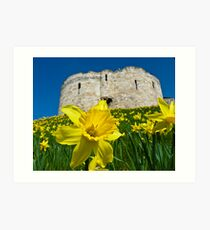 Daffodils by Clifford's Tower, York Art Print